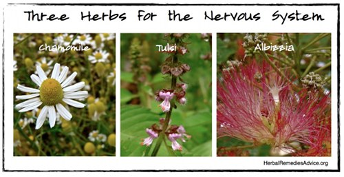 Herbs for the Nervous System
