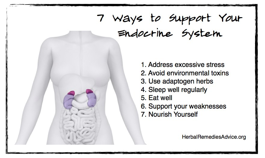 Seven ways to support your endocrine system health