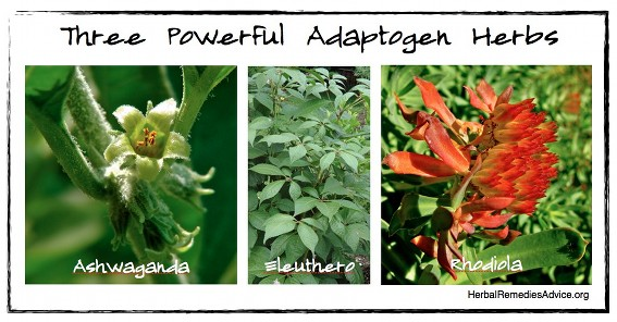 Adaptogen herbs can be described as deep nourishment for our total well-being.