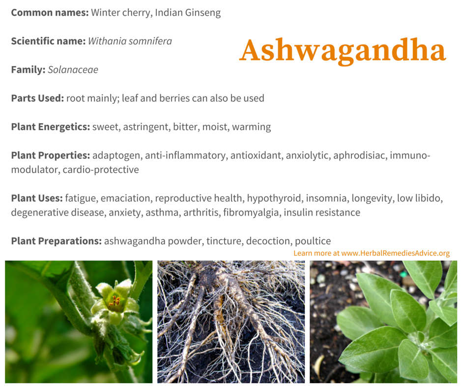 What is the benefit of ashwagandha