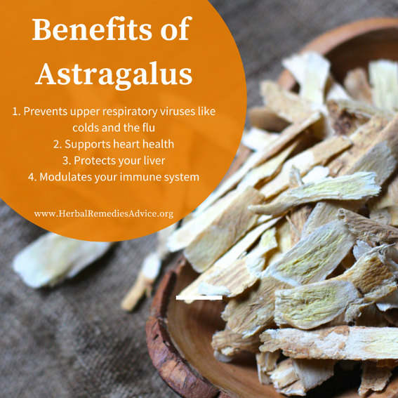 Astragalus Health Benefits