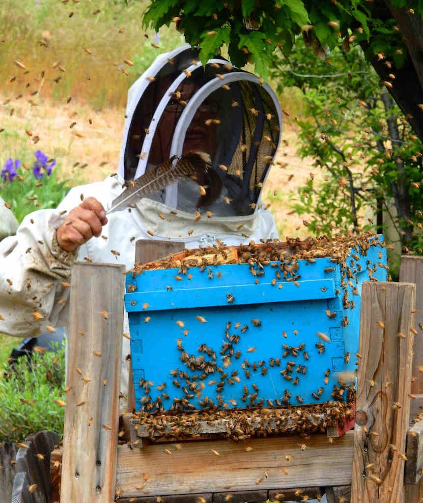 is honey healthy?