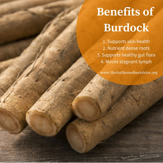 What are the benefits of burdock root