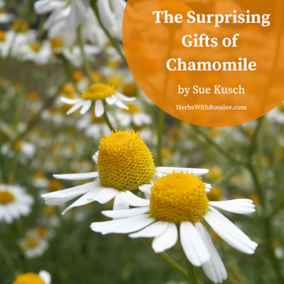 health benefits of chamomile tea