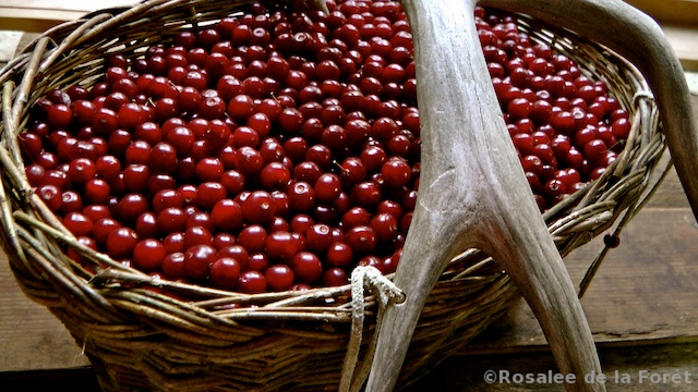how to prepare chokecherries for jelly