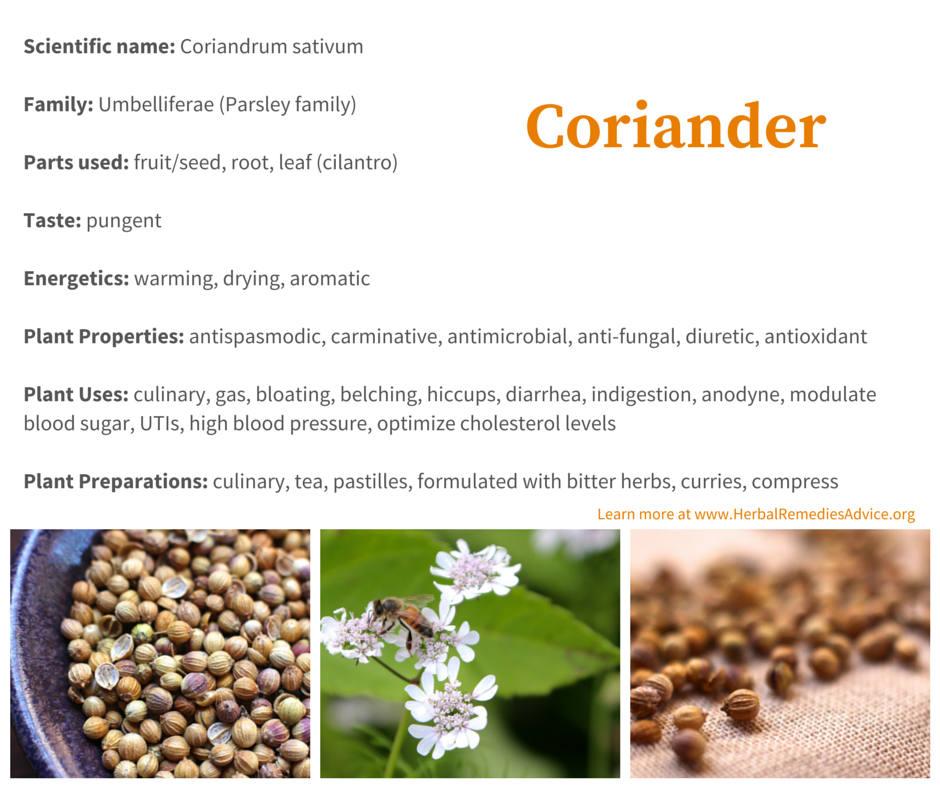 Coriander Benefits