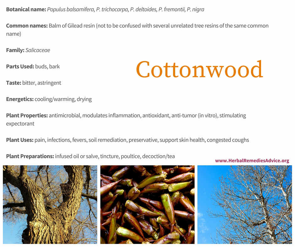 Cottonwood Benefits