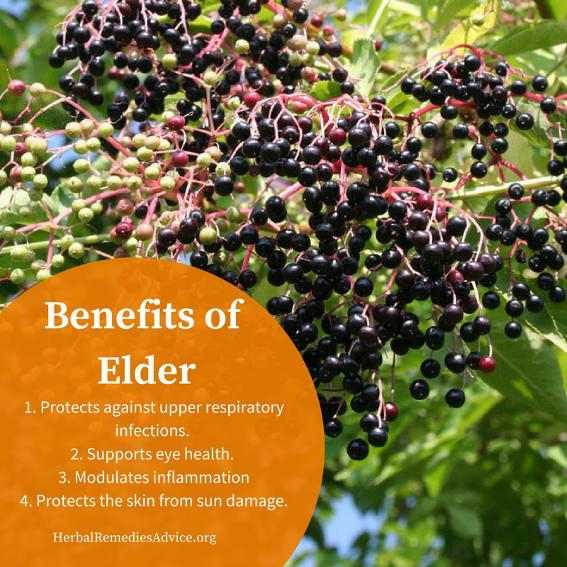 benefits of elderberry