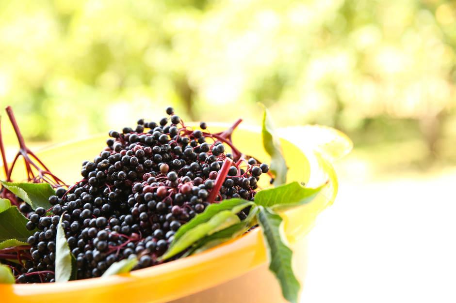Elderberry Benefits