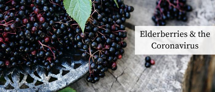 elderberries and the coronavirus