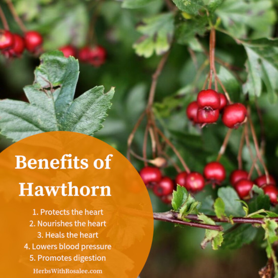 hawthorn uses