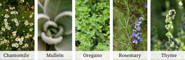 herbal steam herbs