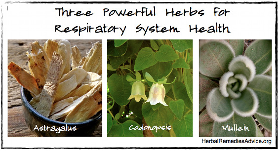 Herbs for Respiratory System