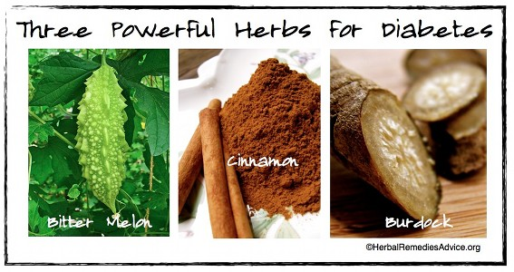 Various herbs, when used alongside diet and lifestyle changes, can promote insulin sensitivity