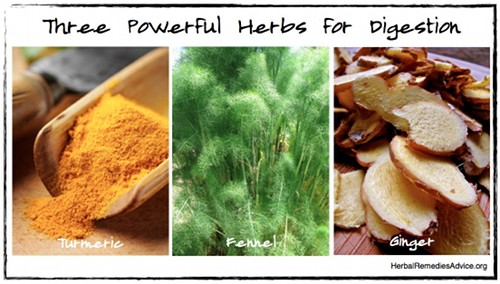 Powerful Herbs for Digestion