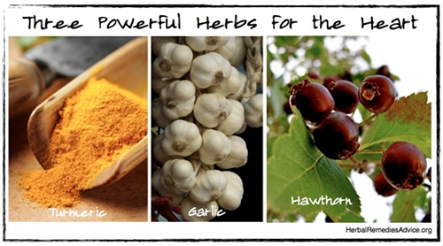 Three powerful herbs for cardiovascular health