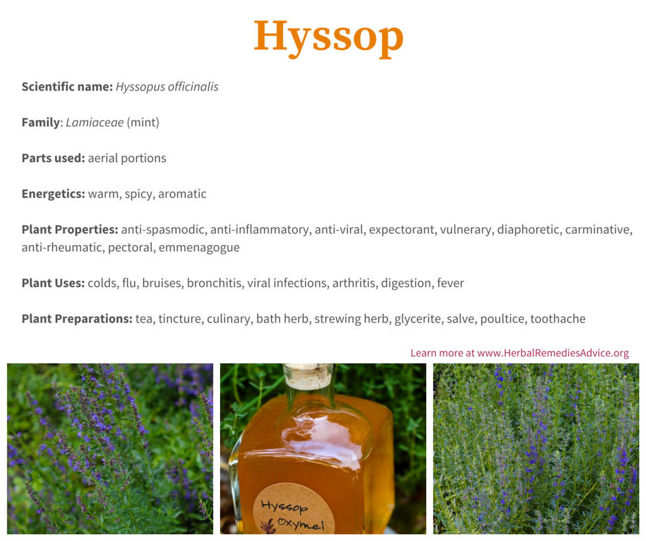 health benefits of hyssop