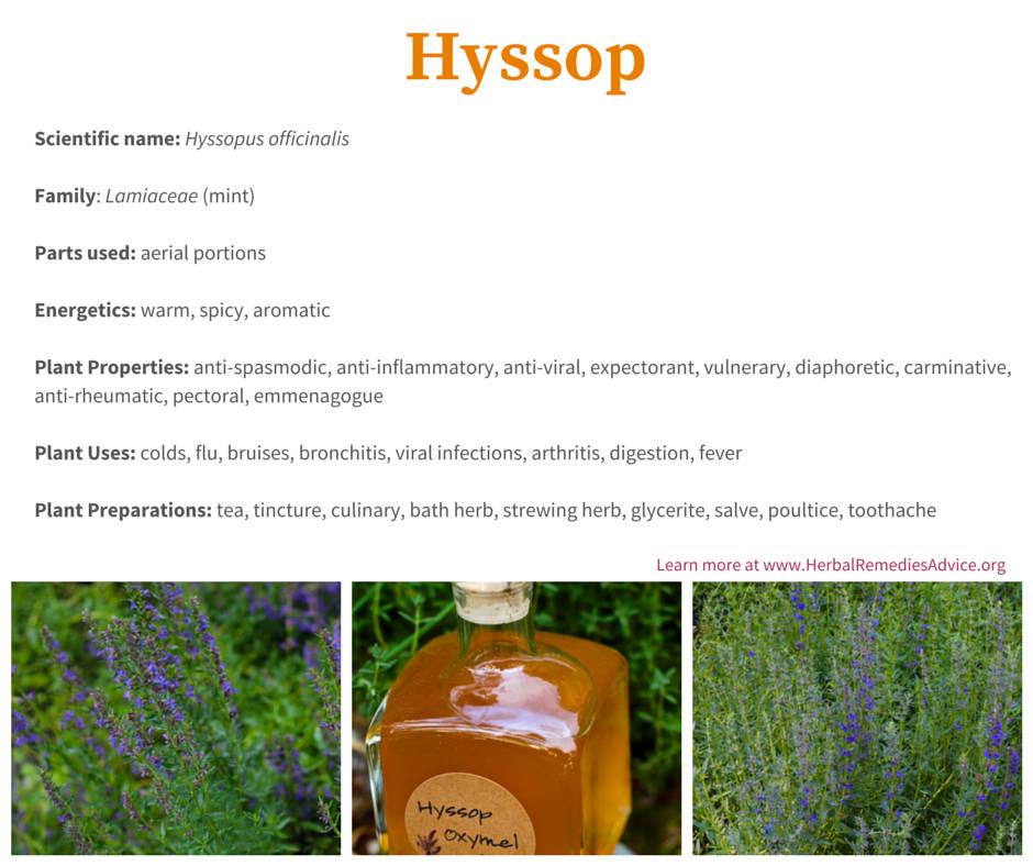 health benefits of hyssop
