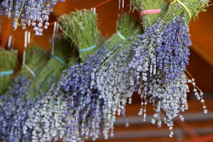 Lavender pictures