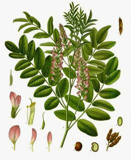 「licorice」の画像検索結果