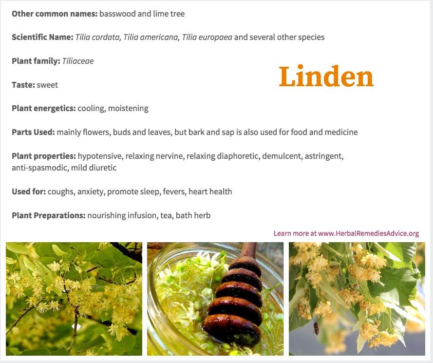 Linden Flower Tea Benefits