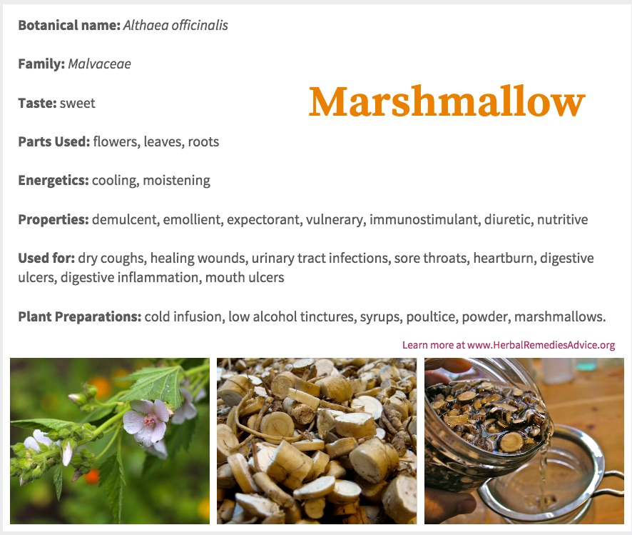 The Marshmallow Herb