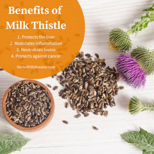 milk thistle benefits