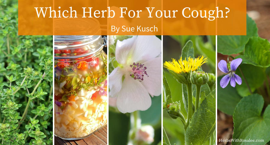 herbal remedies for coughs