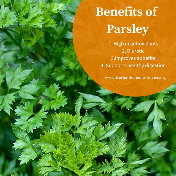 Food And Drink New Parsley