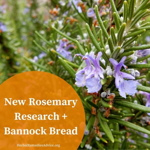 Rosemary Bannock Recipe