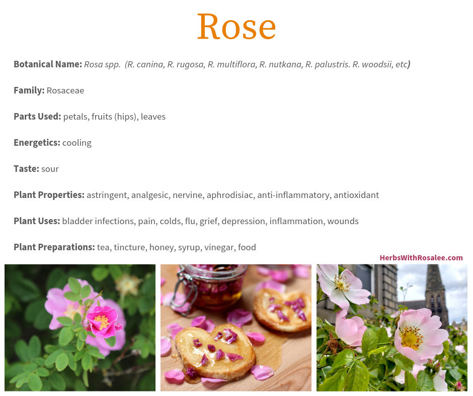 Rose Benefits