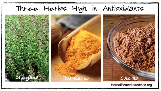 Antioxidant foods and herbs nourish and protect the human integumentary system.