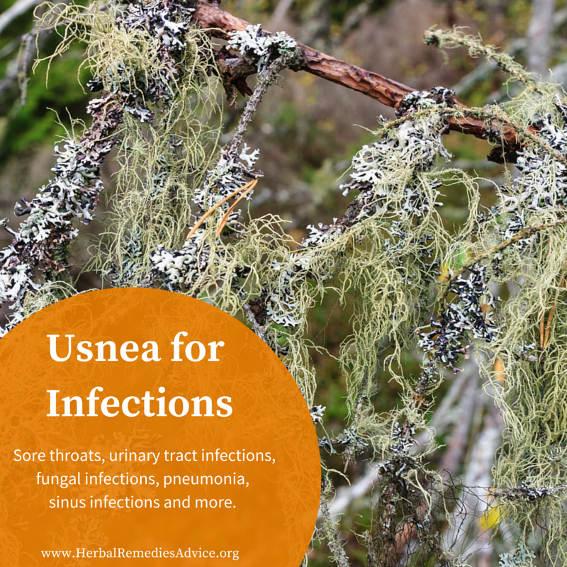 Usnea Herb