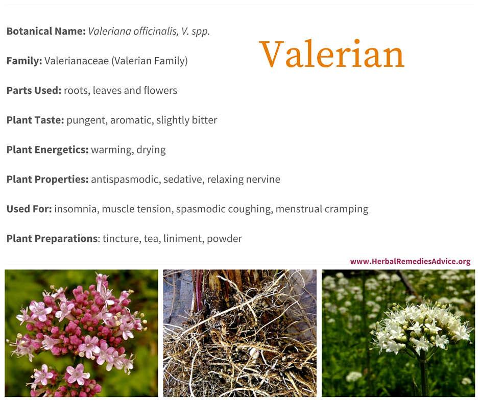Valerian Benefits