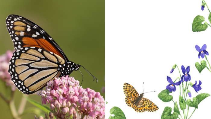 Violet and Monarch Butterflies