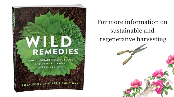 Wild Remedies on Roses