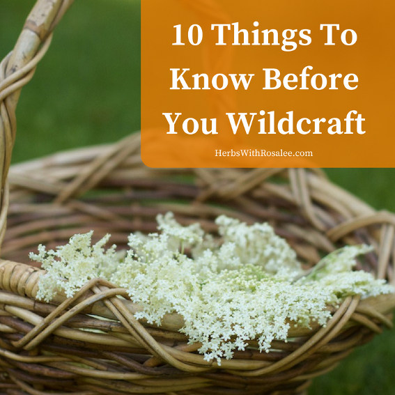 wildcrafting wild plants
