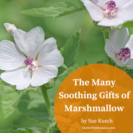 marshmallow herb