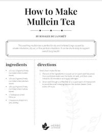 mullein tea recipe