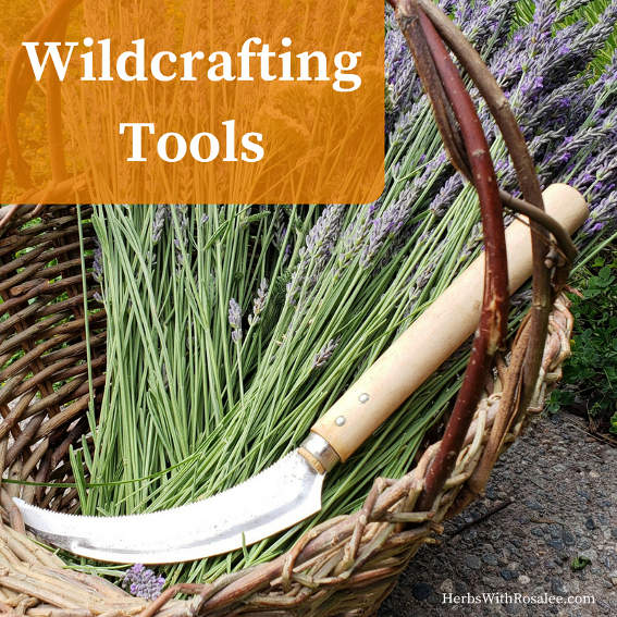 wildcrafting wild plants