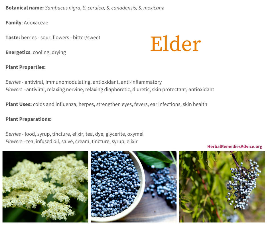 Elderberry Benefits