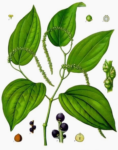 Picture of Black Pepper