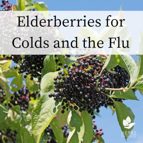 elderberry for colds
