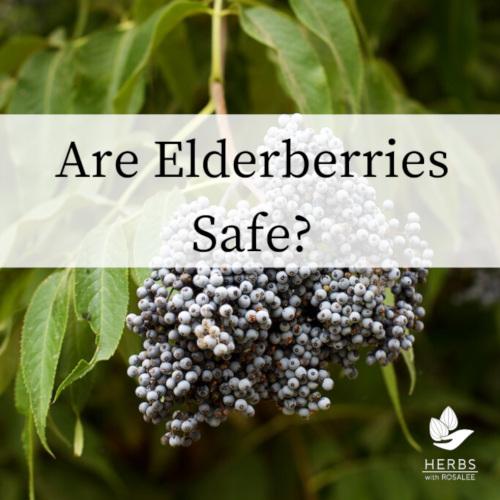 elderberry side effects
