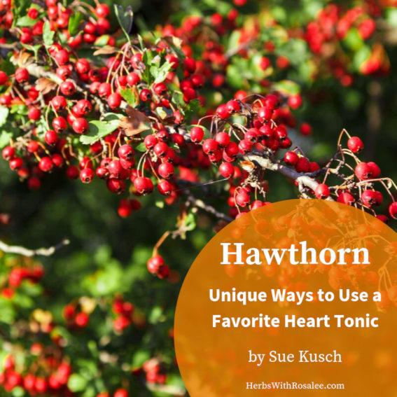hawthorn herb