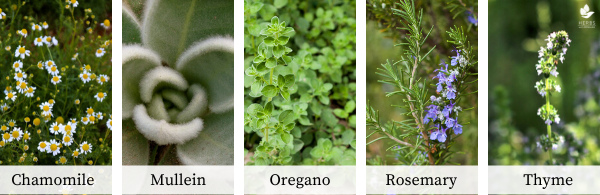 herbal steam herbs