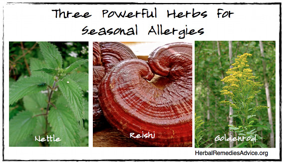 Herbs for Allergies