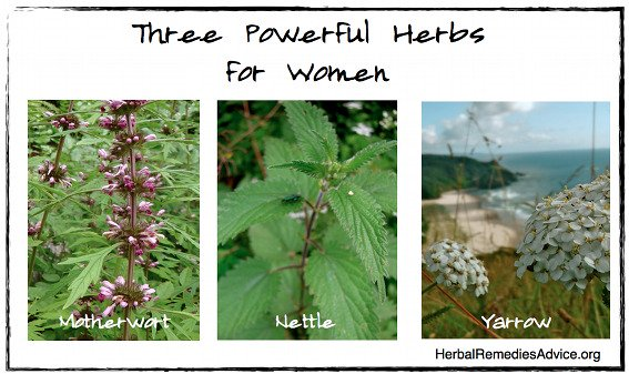 Herbs for Female Reproductive System