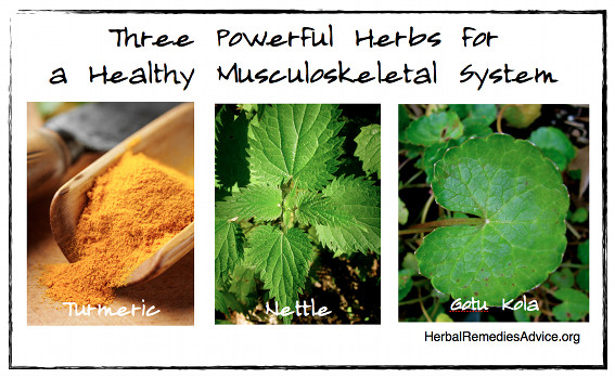Three Powerful Herbs for a Healthy Musculoskeletal System