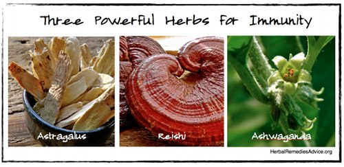 Herbs can have a profound effect on boosting your immune system